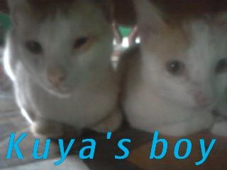 Kuyas  boy